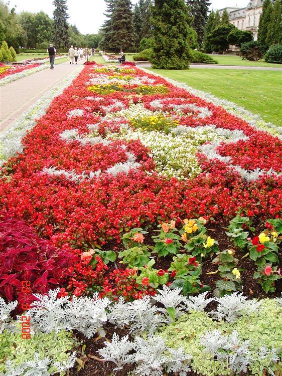 Ciechocinek Dywany Kwiatowe Atrakcje Turystyczne